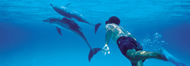 swimsdolphins-header3
